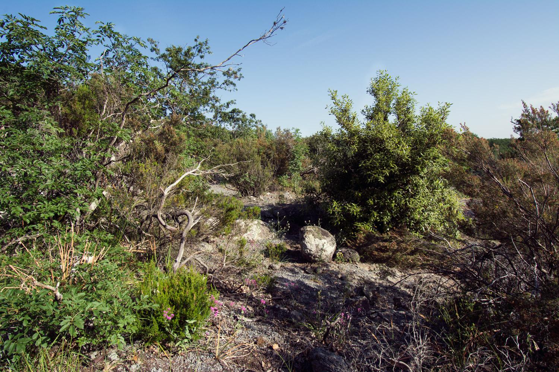 vegetazione della zona elcetella sul monte fogliano a vetralla vicino eremo san girolamo